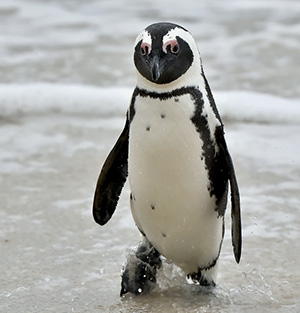 google penguin changes seo